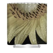 Swagger Shower Curtain