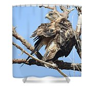 Swainson Hawk Shower Curtain