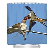 Swallow And Cub Shower Curtain