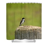 Swallow On A Stump Shower Curtain