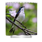 Swallow Song Shower Curtain