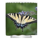 Swallowtail 20120723_24a Shower Curtain