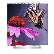 Swallowtail And Coneflower Shower Curtain