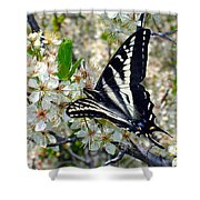 Swallowtail And Plum Blossoms Shower Curtain