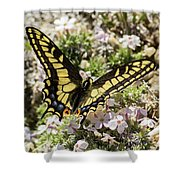 Swallowtail At Sand Wash Shower Curtain