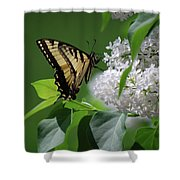 Swallowtail Beauty Shower Curtain