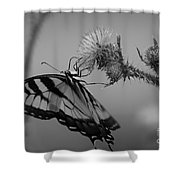 Swallowtail Black And White Shower Curtain
