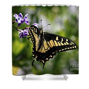 Swallowtail Butterfly 2 Shower Curtain