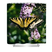 Swallowtail Butterfly At The Maryland Zoo Shower Curtain