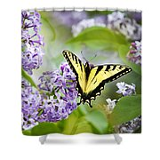 Swallowtail Butterfly On Lilacs Shower Curtain