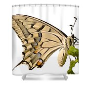 Swallowtail Butterfly Vector Isolated Shower Curtain