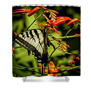 Swallowtail Hanging On The Crocosmia Shower Curtain
