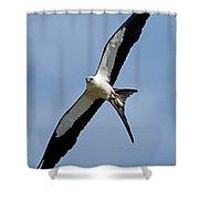 Swallowtail Kite Shower Curtain