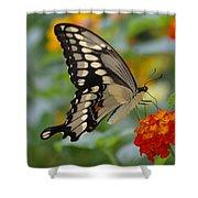 Swallowtail On A Lantana Shower Curtain