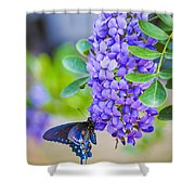 Swallowtail On Mountain Laurel Shower Curtain