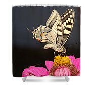 Swallowtail On Pink Flower  Shower Curtain