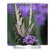 Swallowtail Staredown Shower Curtain