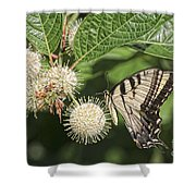 Swallowtail With Flowers Shower Curtain