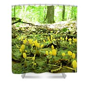 Swamp Becon Fungi Shower Curtain
