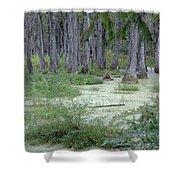Swamp Garden At Magnolia Plantation And Gardens Shower Curtain