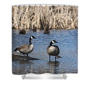 Swamp Life Shower Curtain