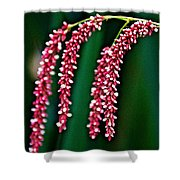 Swamp Smartweed Closeup In Campground In Saginaw-minnesota  Shower Curtain