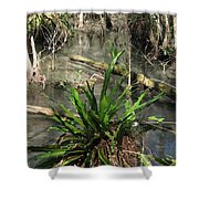 Swamp Vegetation Shower Curtain