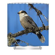 Swampy Perch Shower Curtain