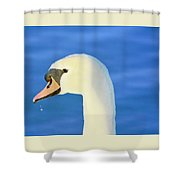 Swan 11 Shower Curtain