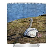 Swan 577 Shower Curtain