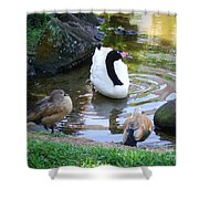 Swan And Wood Ducks Shower Curtain