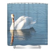 Swan Cape May Shower Curtain