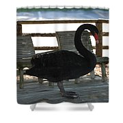 Swan Chairs Shower Curtain