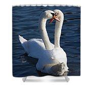 Swan Courtship  Shower Curtain