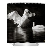 Swan Display Shower Curtain