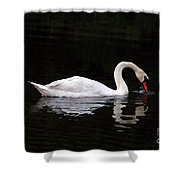 Swan Drinking Shower Curtain