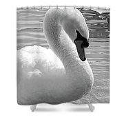 Swan Elegance Black And White Shower Curtain