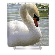 Swan Elegance Shower Curtain