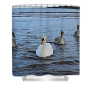 Swan Family At Sea Shower Curtain