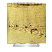 Swan Family Into The Sunset Shower Curtain