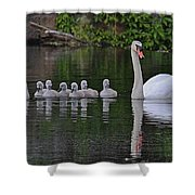 Swan Family Portrait Shower Curtain