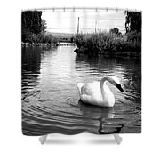Swan In Black And White Shower Curtain