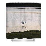 Swan In Flight Shower Curtain