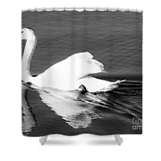Swan In Motion On A Pond Shower Curtain