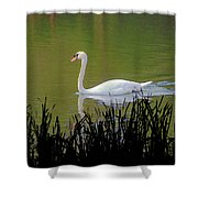 Swan In The Pond Shower Curtain