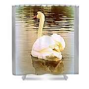 swan in the genus Cygnus Shower Curtain