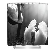 Swan Lake In Winter -  Kingsbury Nature Shower Curtain