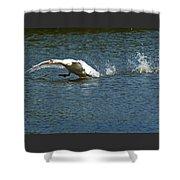 Swan Landing 2 Shower Curtain