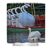 Swan Meeting Up With Some Friends Shower Curtain