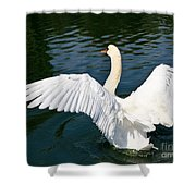 Swan Moment Shower Curtain